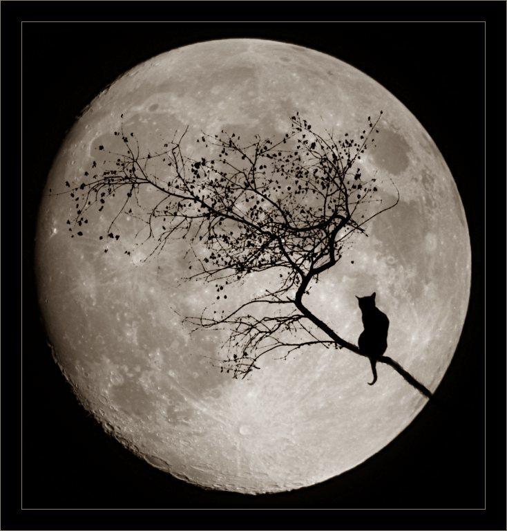И снова про фотографирование Луны подручными средствами - 9
