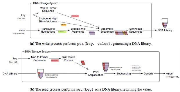 Ученым удалось успешно сохранить изображения в ДНК и считать их - 2