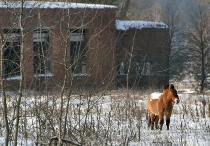 Скрытые видеокамеры сняли изобилие животной жизни в Чернобыльской зоне - 5