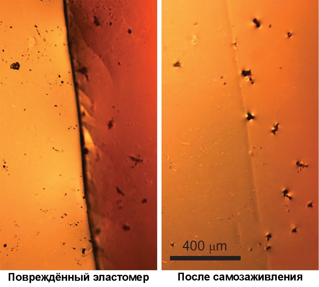Новый эластомер растягивается до 100х от своего размера и восстанавливается после повреждений - 4
