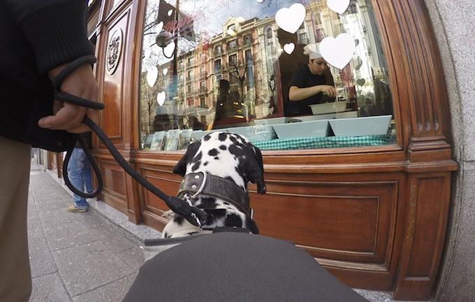 Гаджет Posting Tail превращает собаку в блоггера - 2