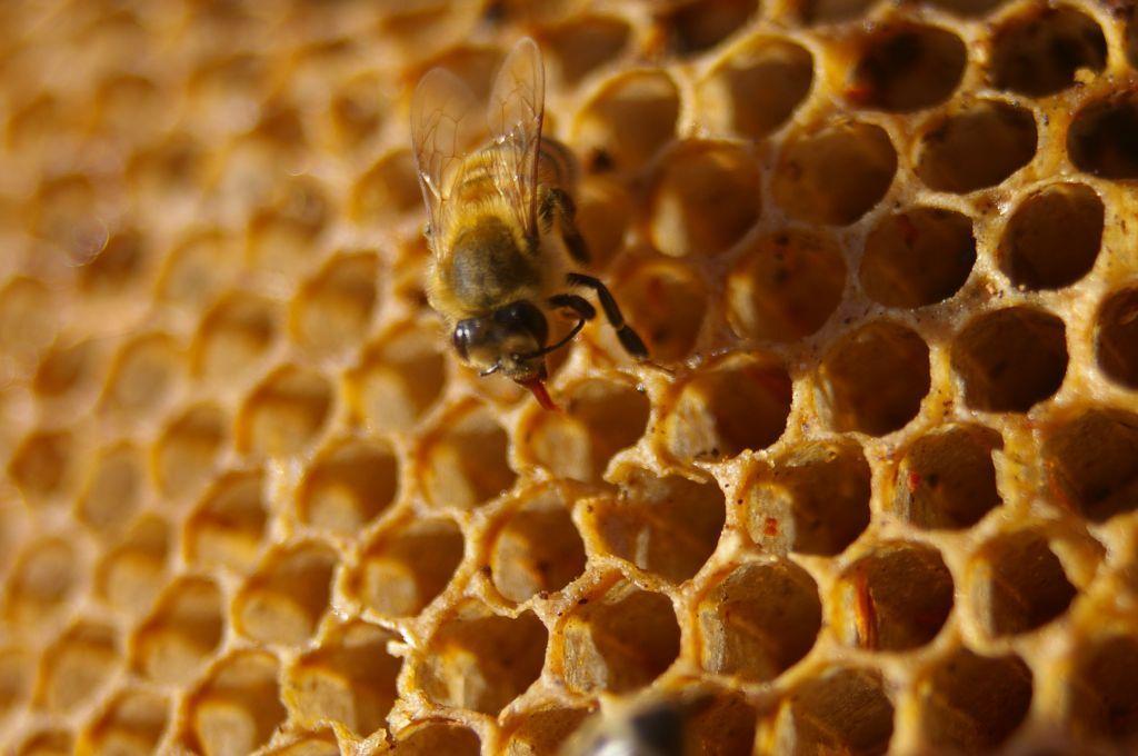 Интернет пчел, или Зеленое будущее M2M приложений - 1