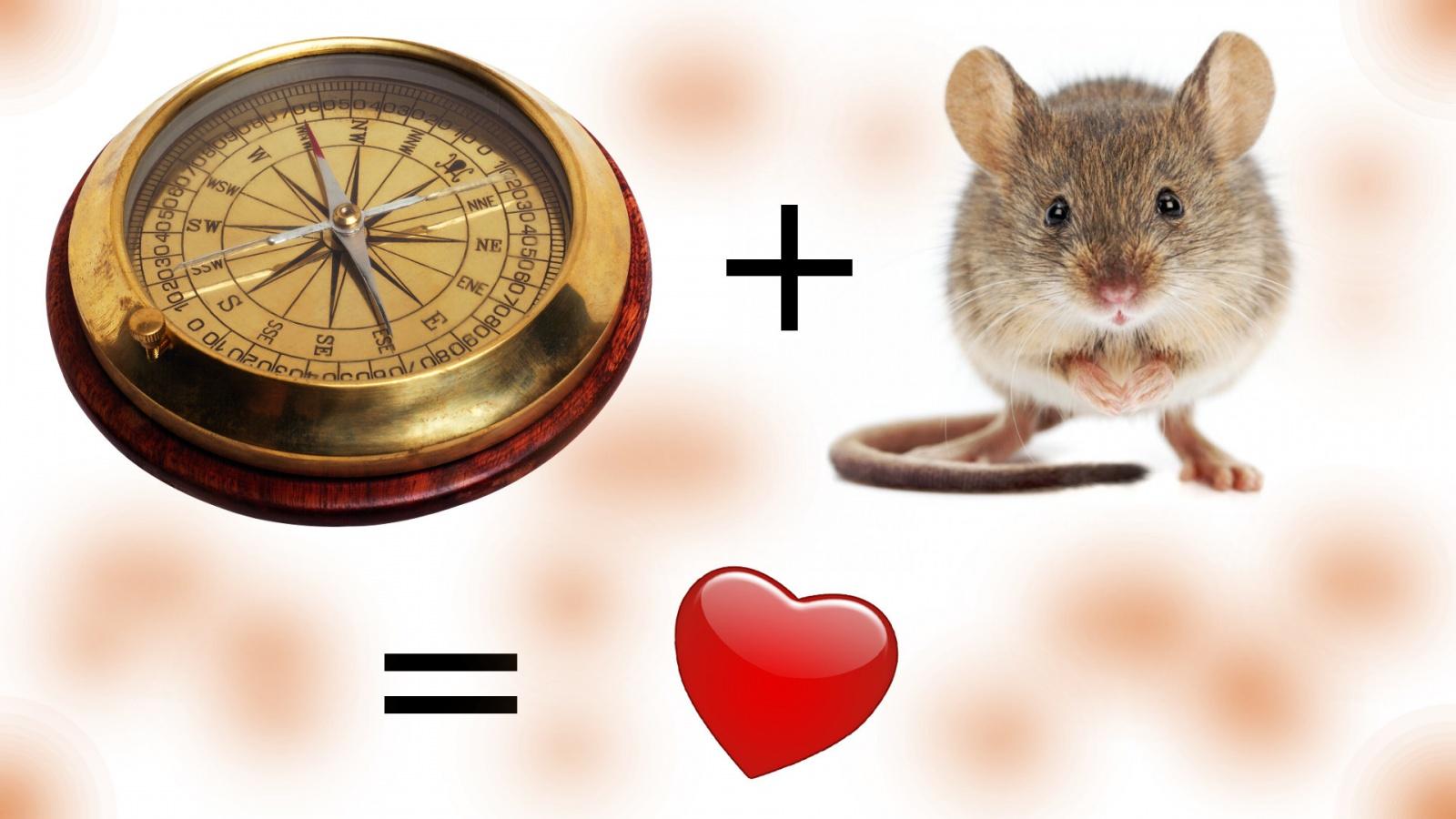 Как скрестить мышку с компасом, или снова о Logitech - 1