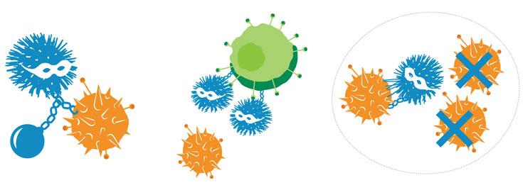 Макромолекулы — новое оружие против вирусов