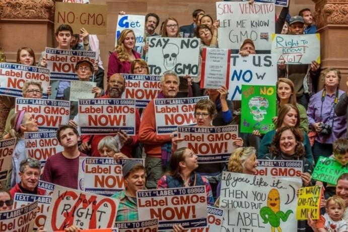 Завершено самое масштабное исследование влияния ГМО на здоровье человека - 2