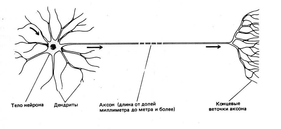Нейронная сеть Хопфилда на пальцах - 1