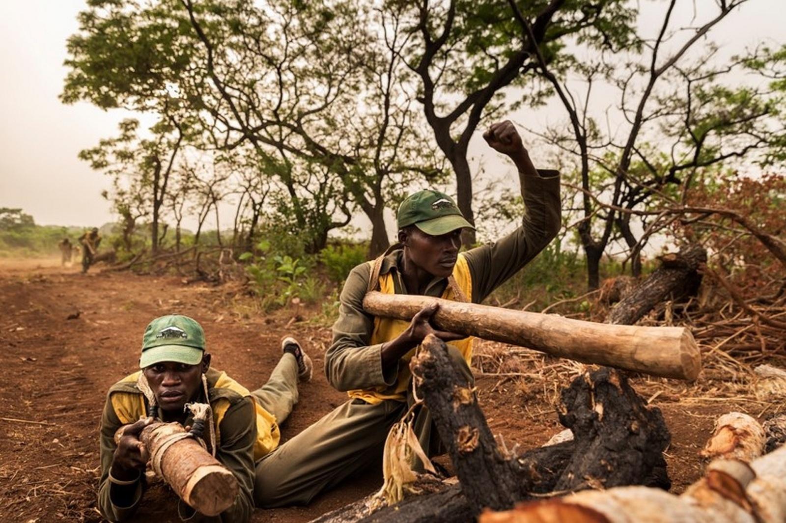 Защитники природы Африки пострадали от обновления Windows 10 - 2