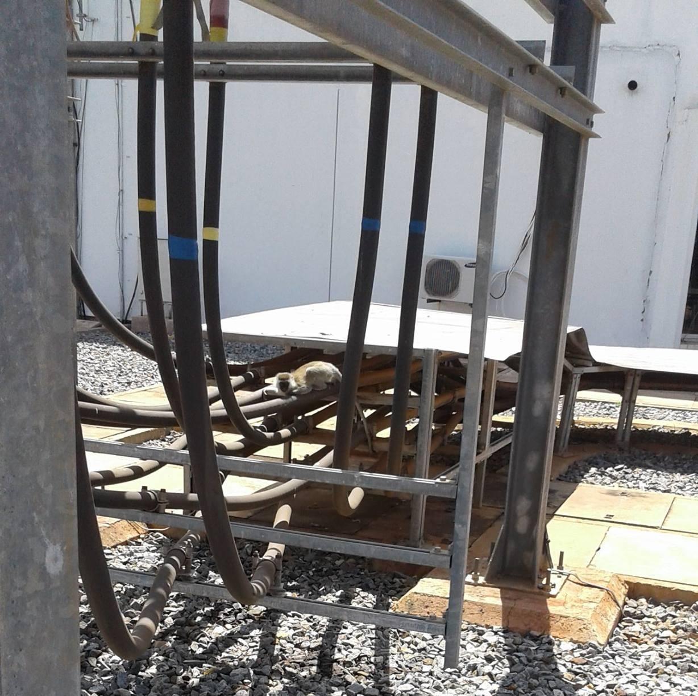 Обезьяна упала на трансформатор ГЭС и обесточила целую страну - 2