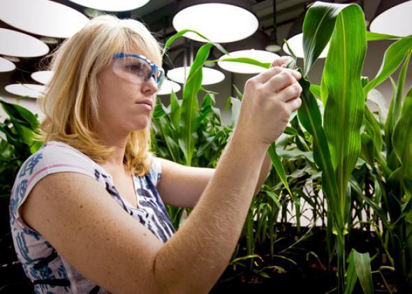В Госдуме обсуждают законопроект о полном запрете ГМО в России (второе чтение) - 2