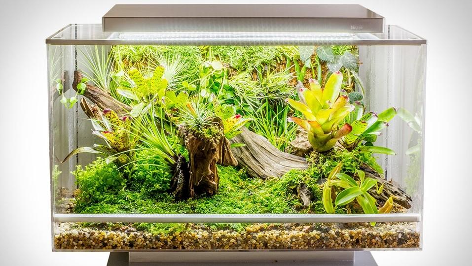 Технологии и садоводство: как ухаживать за своим дачным участком летом? - 5