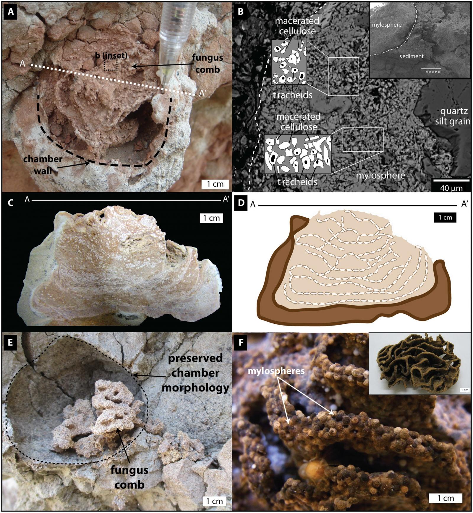 Термиты освоили сельское хозяйство на 25 млн лет раньше людей - 2