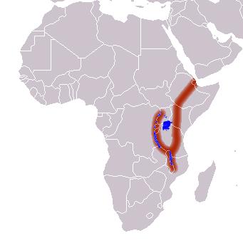 Термиты освоили сельское хозяйство на 25 млн лет раньше людей - 3