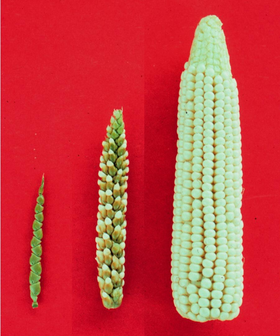 Как геномное редактирование изменит сельское хозяйство. Если мы разрешим… - 6