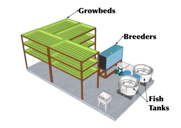 Verticulture: аквапоническая ферма по выращиванию базилика и тилапии - 2