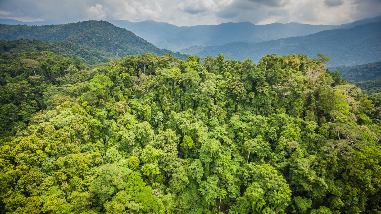 Удивительный план по выращиванию денег на деревьях - 2