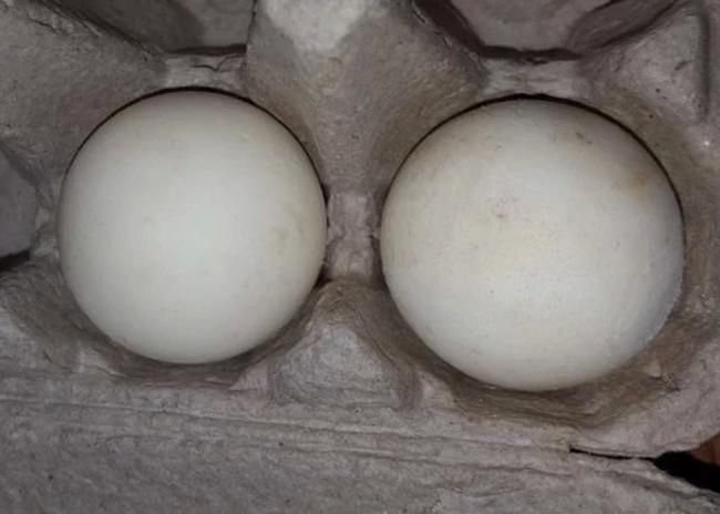 Двойная ловушка для браконьеров. Поддельные черепашьи яйца с GPS-трекерами - 3
