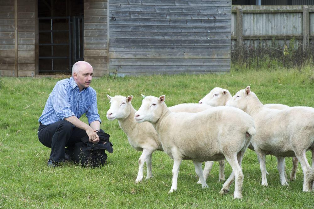 Клоны овечки Долли помогают доказывать безопасность SCNT-клонирования - 1