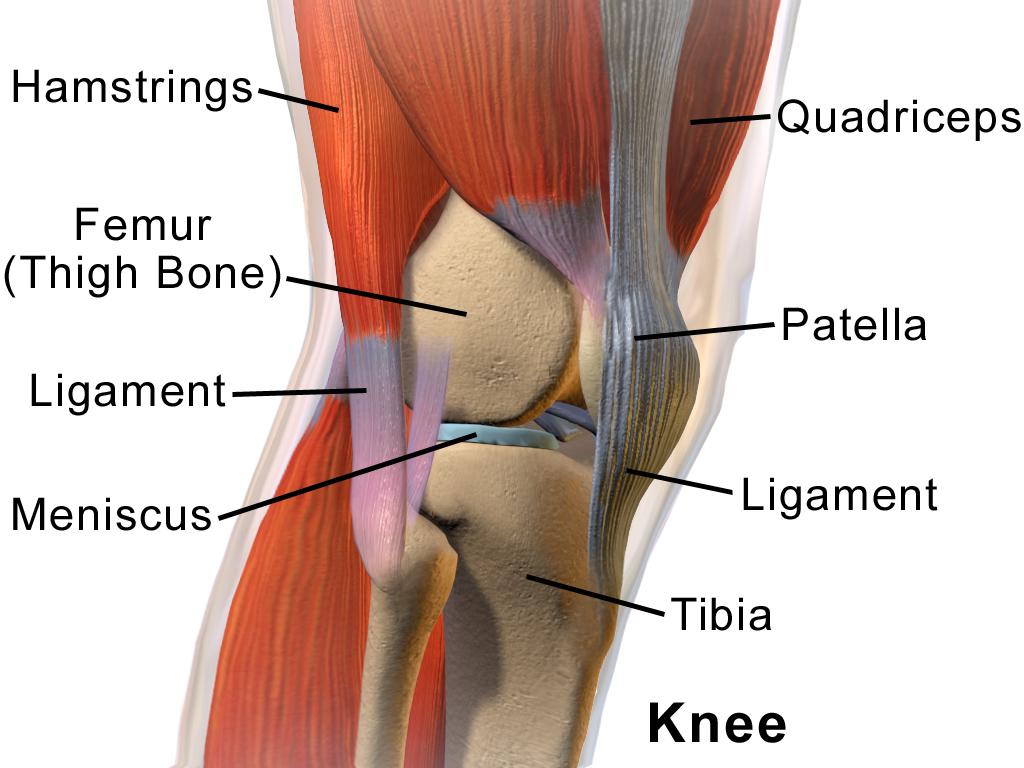 Science: почему травмы колена зачастую не заживают? - 3
