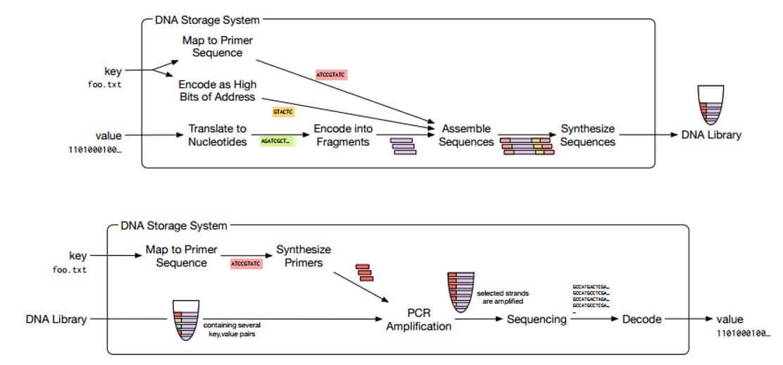 «Заложено природой»: Система хранения данных на основе ДНК - 5