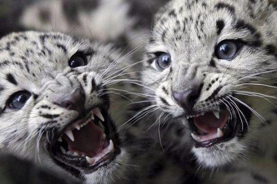 Ученые установили, каких животных может не стать уже через 100 лет