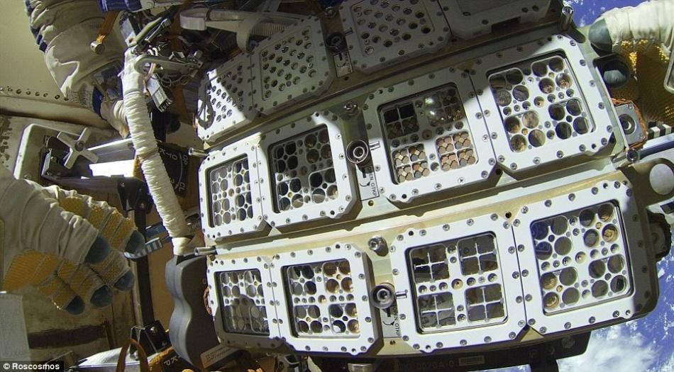 Едят ли микробы космические станции - 11
