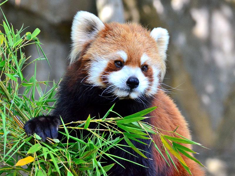 Firefox 48: многопроцессность (и как её включить) - 1