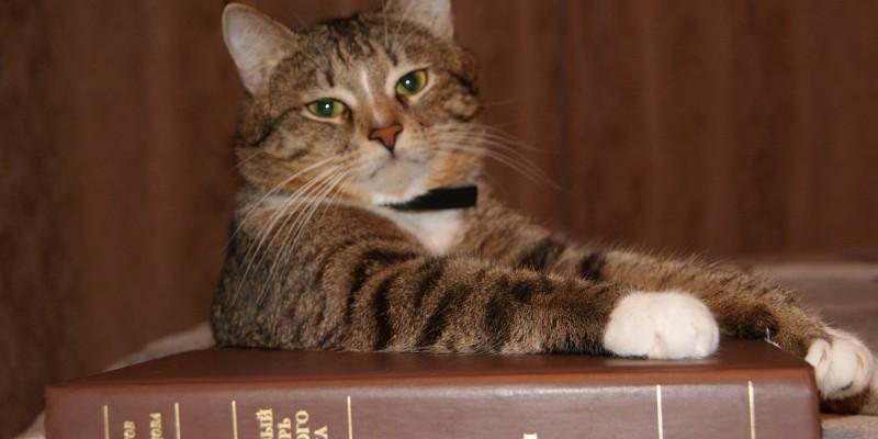 Контрабанда «Гамлета» при помощи кота - 1