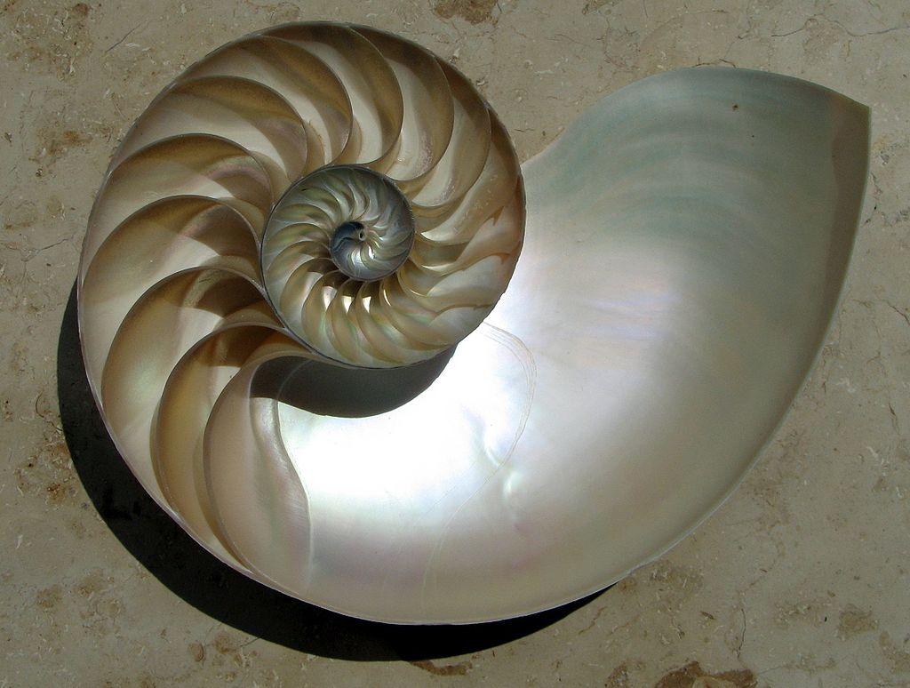 Физика в мире животных: наутилус и его «осмотический насос» - 2