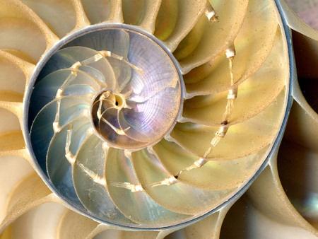 Физика в мире животных: наутилус и его «осмотический насос» - 3