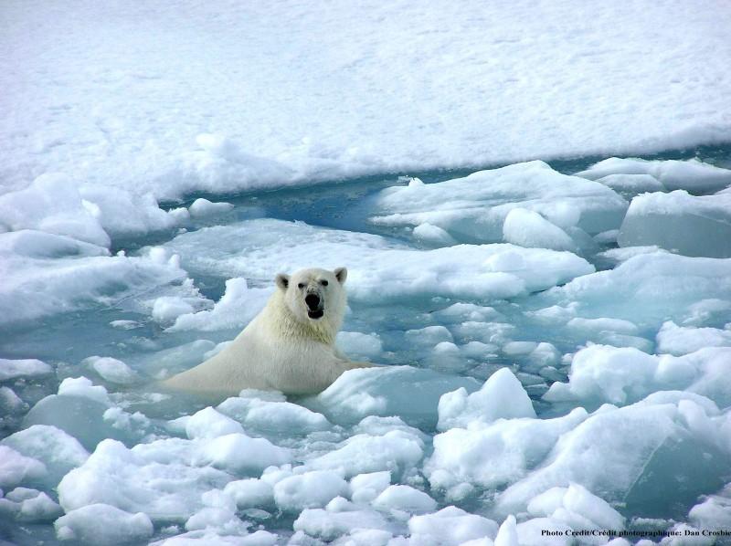 Глобальное потепление для начинающих - 2