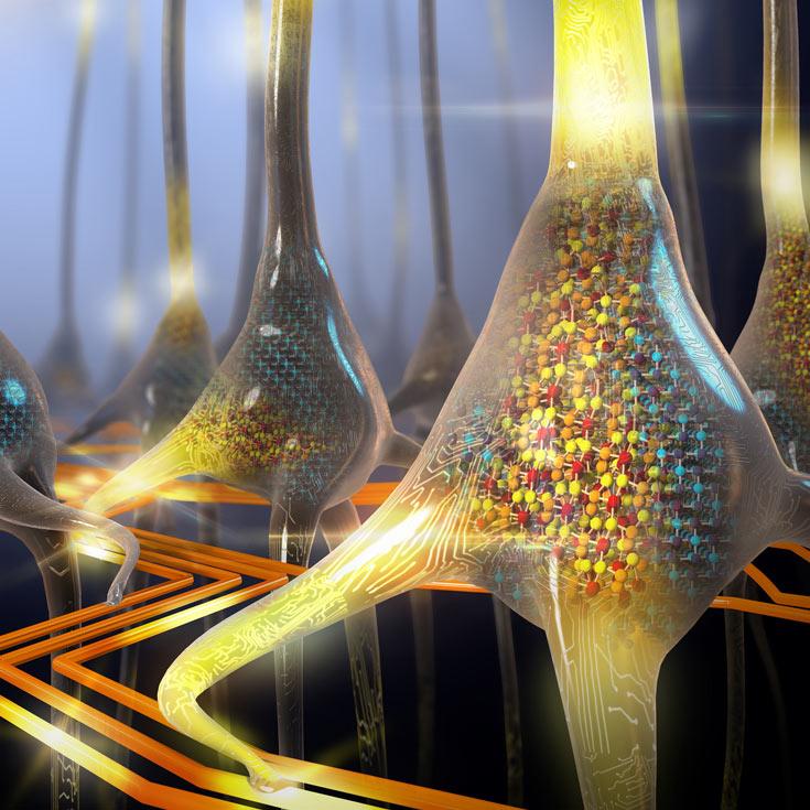 Искусственные нейроны работают подобно нейронам живого организма