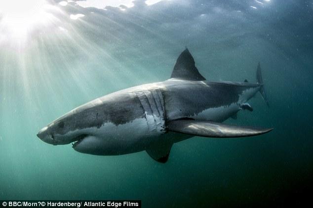 Акулы и дельфины как оружие в руках военных - 2