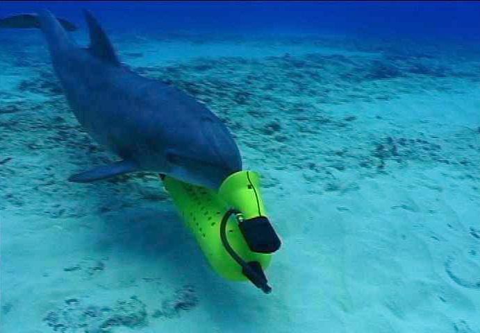 Акулы и дельфины как оружие в руках военных - 4