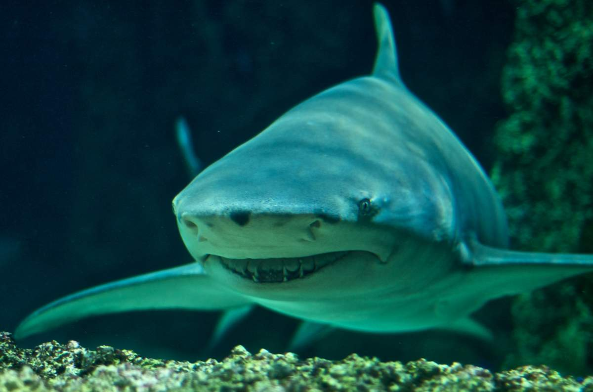 Акулы и дельфины как оружие в руках военных - 1