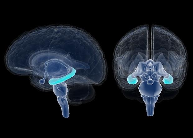 Стартап KerNEL пытается создать коммерческие мозговые импланты для улучшения памяти - 2