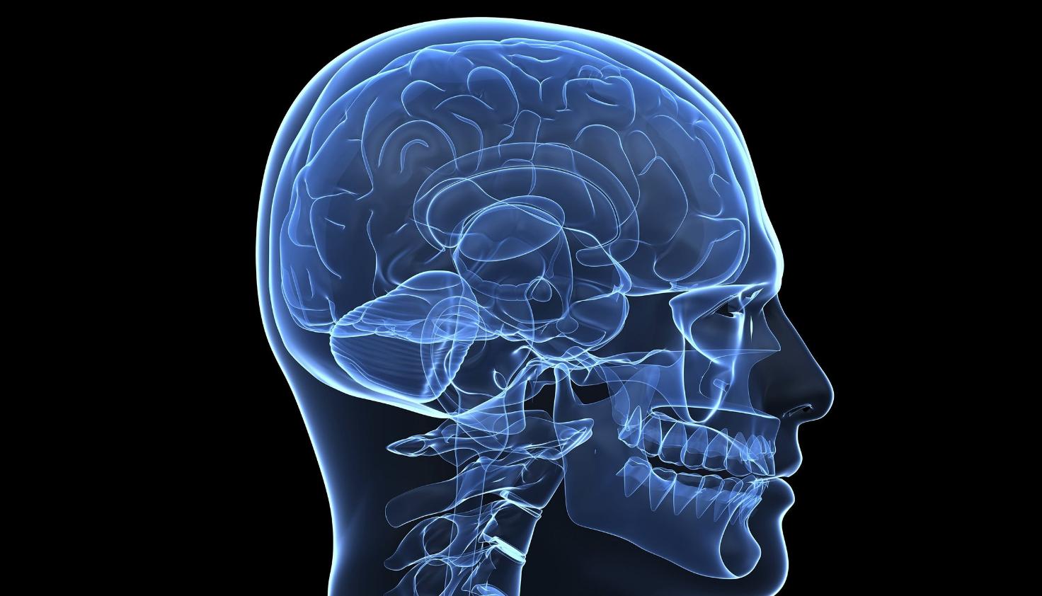 Стартап KerNEL пытается создать коммерческие мозговые импланты для улучшения памяти - 1