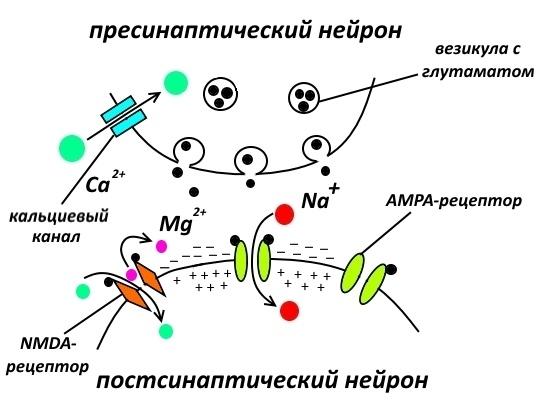 Фармакологическая модуляция памяти. Часть 1 - 2