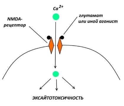 Фармакологическая модуляция памяти. Часть 1 - 3