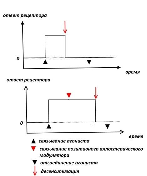 Фармакологическая модуляция памяти. Часть 1 - 6