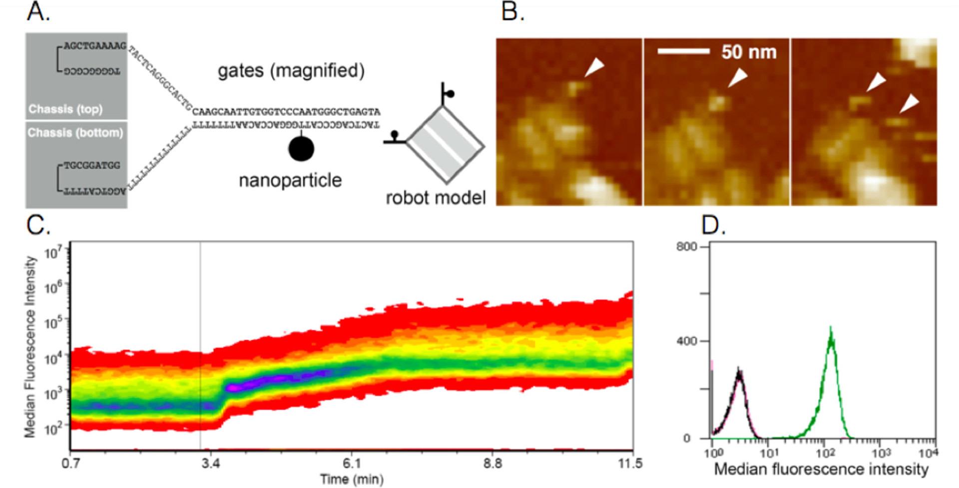 «Умные» наноботы впрыскивают вещества, реагируя на состояние мозга - 4