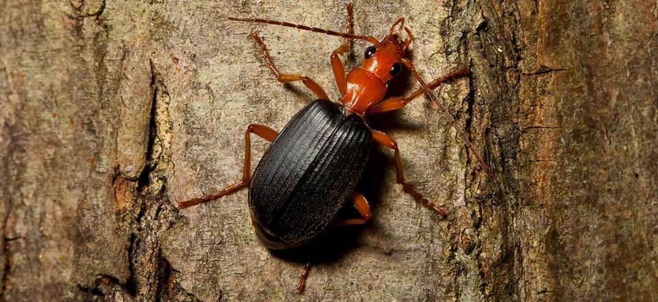 Физика в мире животных: жук-бомбардир и его «орудие» - 1