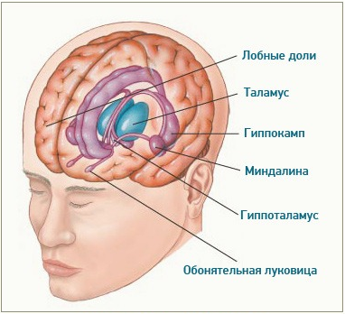 Триггер для сознания? 25-летнего парня вывели из комы, фокусируя ультразвук на небольшом участке в центре мозга - 2