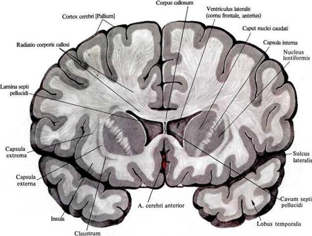Логика сознания. Часть 2. Дендритные волны - 2