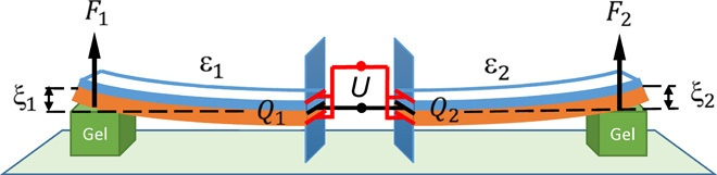 Живая химия. Вычислительное вещество из геля Белоусова-Жаботинского распознаёт простые образы - 2