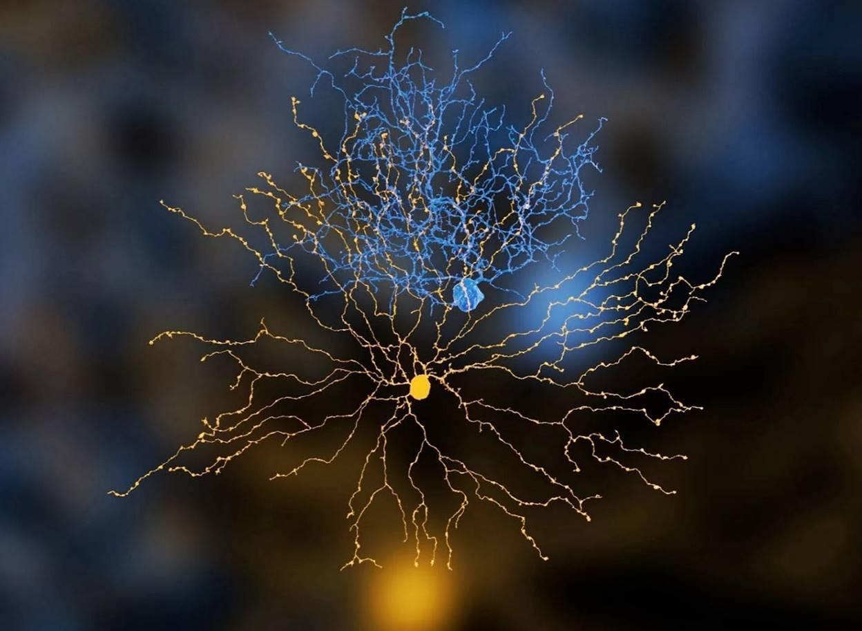 Логика сознания. Часть 4. Секрет памяти мозга - 6