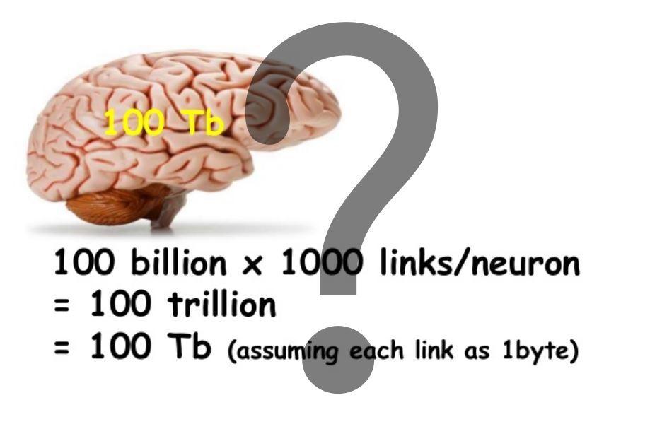 Логика сознания. Часть 4. Секрет памяти мозга - 1