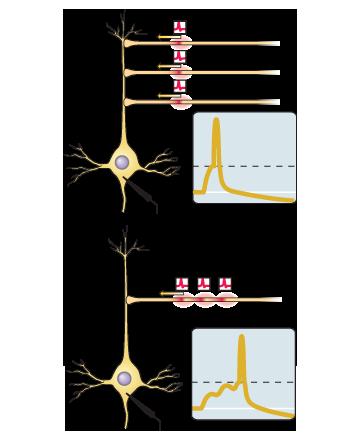 Симулятор нервной системы. Часть 1. Простой сумматор - 10
