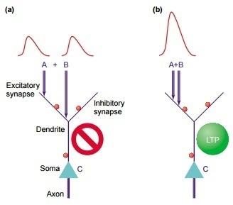 Симулятор нервной системы. Часть 1. Простой сумматор - 12
