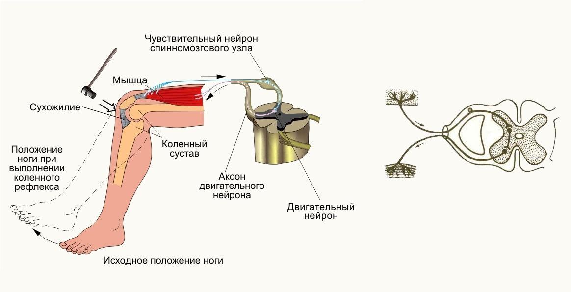 Симулятор нервной системы. Часть 1. Простой сумматор - 4