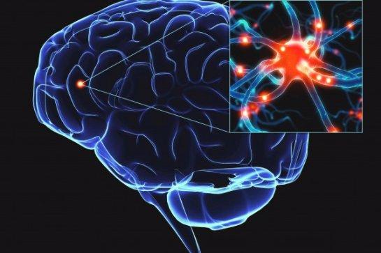 Ученые заявили, что стресс разрушает мозг